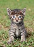 Gullig liten kattungestående Arkivfoton