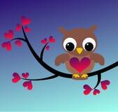gullig liten owl Arkivbild