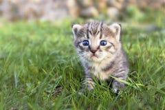Gullig liten strimmig kattkattunge som går på det gröna gräset arkivbild