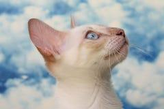 Gullig liten vit katt Royaltyfri Bild