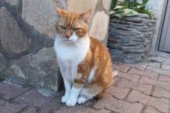 Gullig ljust rödbrun katt Royaltyfria Bilder