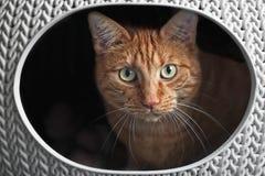 Gullig ljust rödbrun katt i en kattkorg som ser nyfiken till kameran royaltyfri foto
