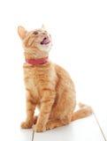 gullig ljust rödbrun kattunge Arkivbild