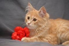 Gullig ljust rödbrun kattunge med blomman royaltyfri bild