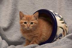 Gullig ljust rödbrun kattunge och en blomkruka Royaltyfria Bilder