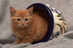Gullig ljust rödbrun kattunge och en blomkruka Arkivbilder