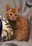Gullig ljust rödbrun kattunge och en blomkruka Royaltyfri Bild