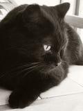 Gullig lugna katt Fotografering för Bildbyråer