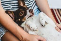 Gullig lycklig rolig hund i armarna av hans husmor royaltyfri foto