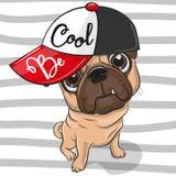 Gullig mopshund med ett rött lock stock illustrationer