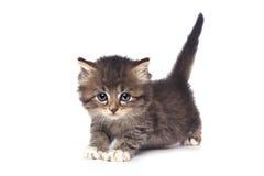 Gullig mycket liten kattunge på en vit bakgrund Arkivfoton
