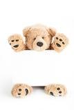 Gullig nallebjörn som rymmer det tomma vita brädet Royaltyfri Bild