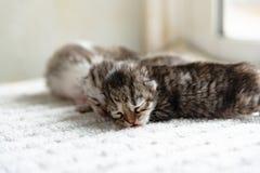 Gullig nyfödd kattunge Arkivbilder