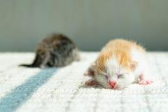 Gullig nyfödd kattunge Fotografering för Bildbyråer