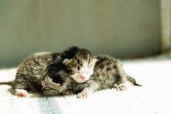 Gullig nyfödd kattunge Royaltyfria Bilder
