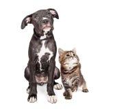 Gullig nyfiken valp och Kitten Looking Up Together Royaltyfri Fotografi