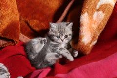 Gullig nyligen uthärdad kattunge royaltyfria foton