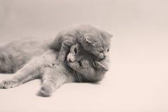 Gullig nyligen uthärdad kattunge arkivbilder
