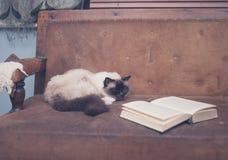 Gullig och klyftig katt med boken på soffan Arkivfoto