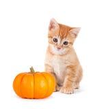 Gullig orange kattunge med mini- pumpa på vit Fotografering för Bildbyråer