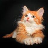 Gullig orange pott arkivfoto