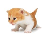 Gullig orange röd kattunge arkivbild