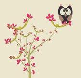 gullig owl Royaltyfri Foto