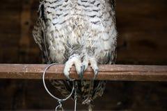 gullig owl Royaltyfria Foton