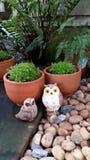 gullig owl Fotografering för Bildbyråer