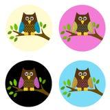 gullig owlset för filial Arkivbild