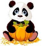 gullig panda Royaltyfri Fotografi