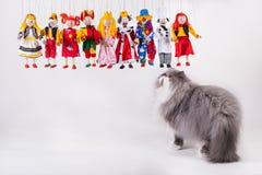 Gullig persisk katt som spelar med dockor arkivbilder