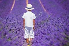 Gullig pojke i lavanderfälten Arkivfoto