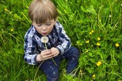Gullig pojke med maskrosen Arkivfoton
