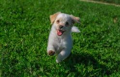 Gullig puppie Royaltyfri Foto