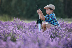 Gullig pys i lavendelfält arkivbild
