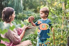 Gullig pys med hans moder som samlar den mogna svarta tomaten i grönsakträdgården Sommar vilar lycklig barndom royaltyfri foto