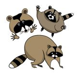 Gullig Raccoon stock illustrationer