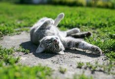 Gullig randig kattunge som ligger och värma sig i den varma vårsolen på royaltyfri foto