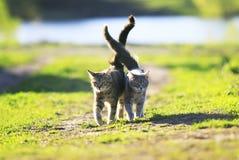 Gullig randig kattunge som två går på gräs bredvid och smekning på a royaltyfria foton