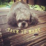Gullig sömnig hund och gul text lätt take arkivfoto