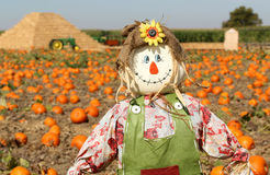 gullig scarecrow Royaltyfri Fotografi