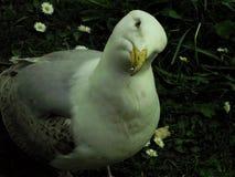 gullig seagull Fotografering för Bildbyråer