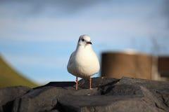 Gullig seagull som kyler på en vagga royaltyfria foton