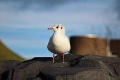 Gullig seagull som kyler på en vagga royaltyfri fotografi