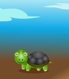 gullig sköldpadda Arkivbilder