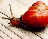 gullig snail Arkivfoton