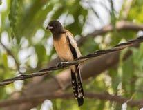 gullig sparrow fotografering för bildbyråer