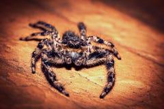 Gullig spindel Fotografering för Bildbyråer