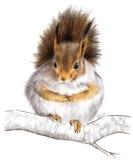 gullig squirrell Fotografering för Bildbyråer